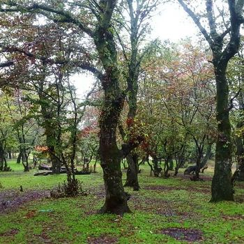 #جنگل #طبیعت #ایران #Iran