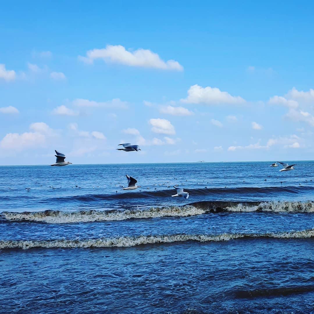 #دریا #چالوس #مرغ_دریایی