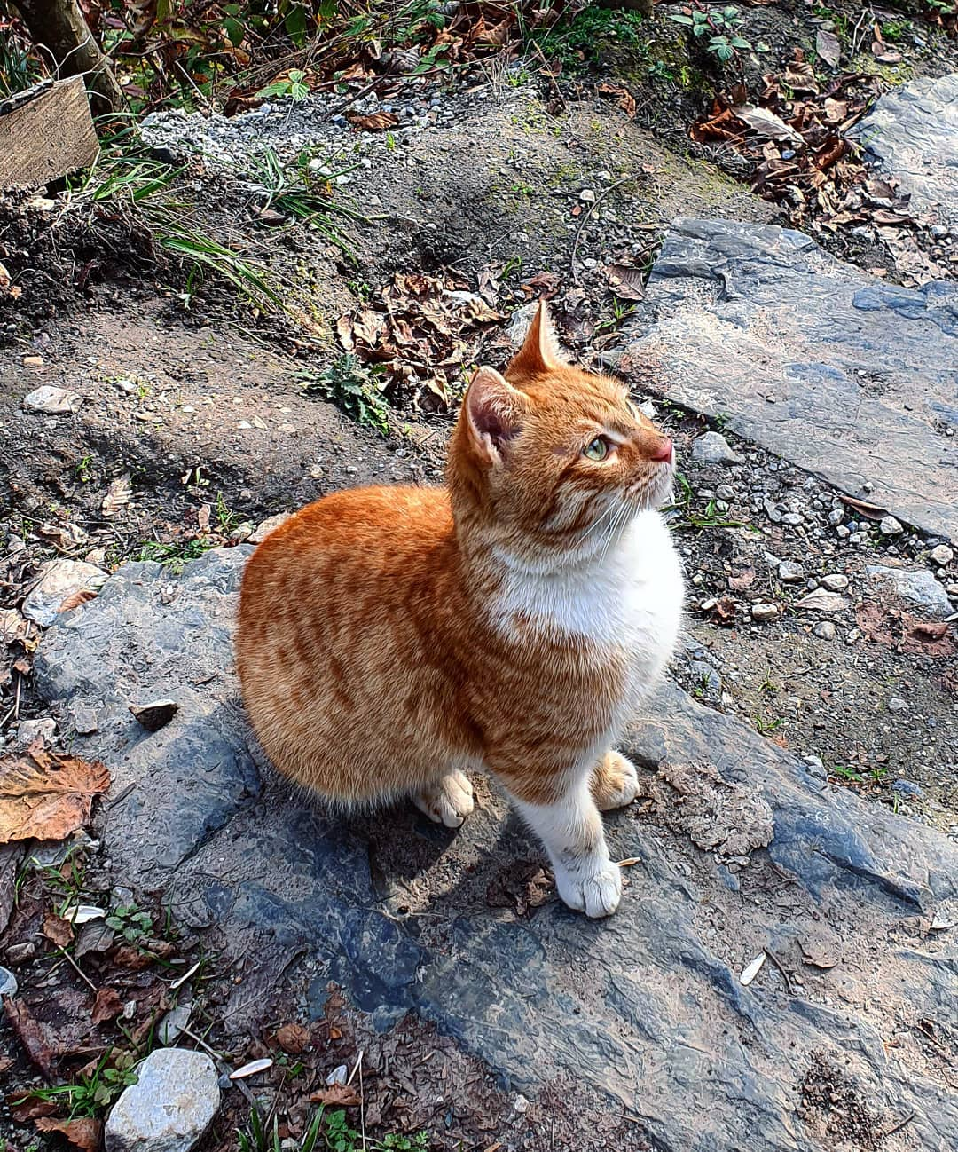 #cat #گربه #فالور #فالوور_رایگان #بیکار #الاف #فوضول #مهربون #دنبال_کردن #همراه